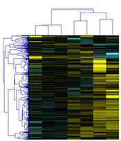 Heatmap of identified somatic mutations from next-generation sequencing.