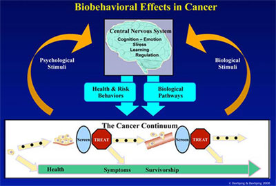 Biobehavioral Effects in Cancer Diagram