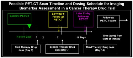 PET-CT Scan Timeline and Dosing Schedule Example