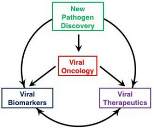 Cancer Virology 4 themes